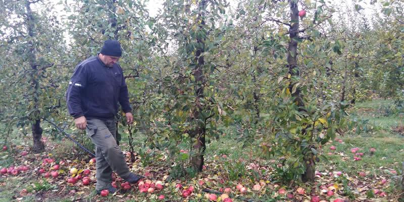 Photo of Поради ниската цена голем дел од индустриското јаболко ќе остане несобрано