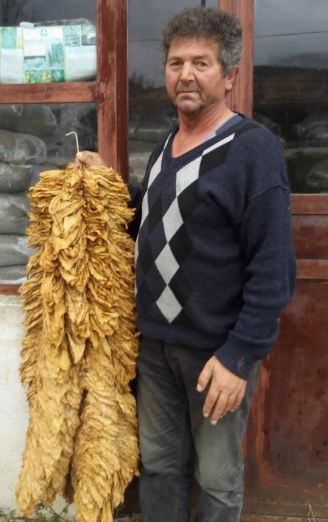 Photo of Успешни приказни со Тераграмин – подобрувач на својства на почва!