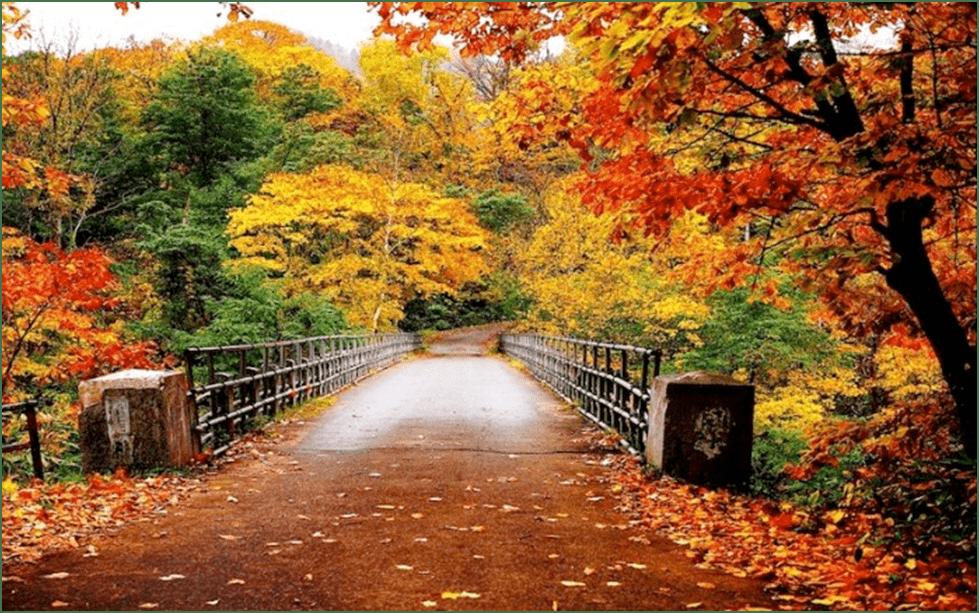 Photo of Што се режи во есен, а што не?