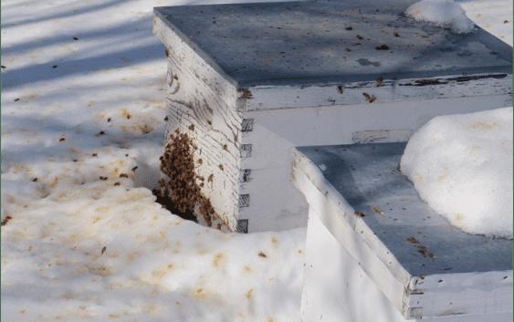 Пчеларник – последни подготовки за полесно презимување на пчелите