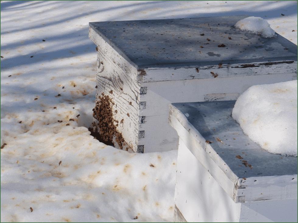 Photo of Пчеларник – последни подготовки за полесно презимување на пчелите