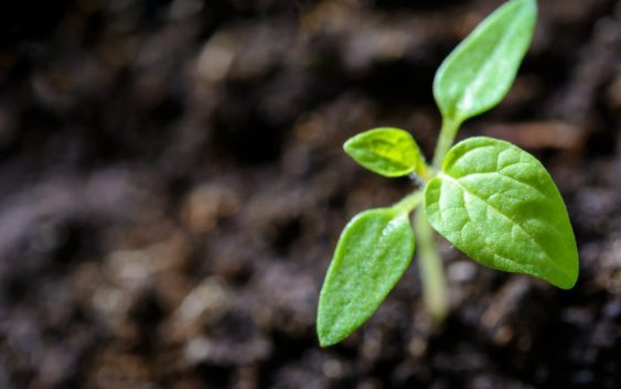 """Изложба на автохтони семиња """"Стари сорти за врвни органски производи"""""""