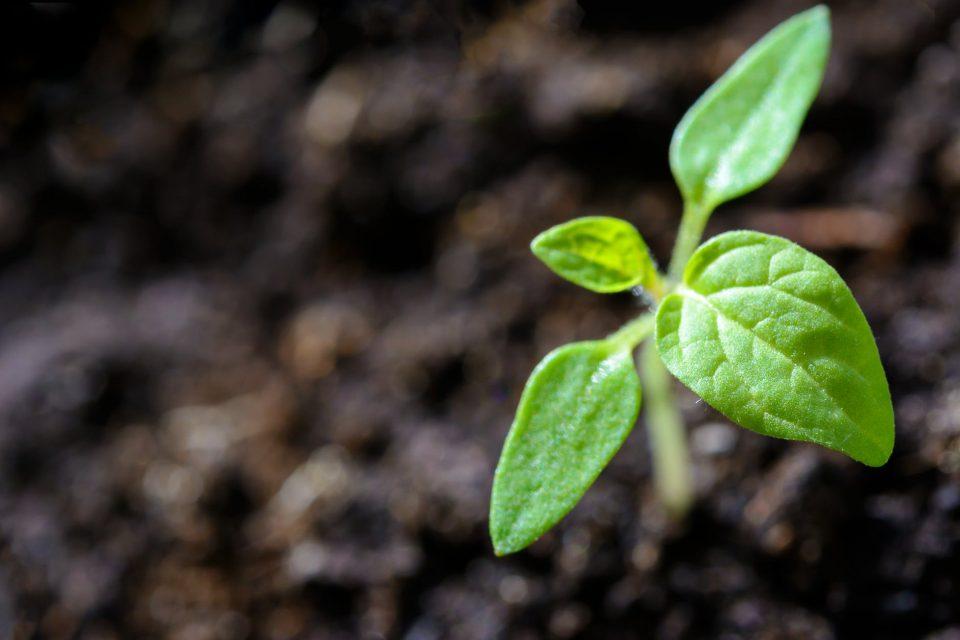 """Photo of Изложба на автохтони семиња """"Стари сорти за врвни органски производи"""""""