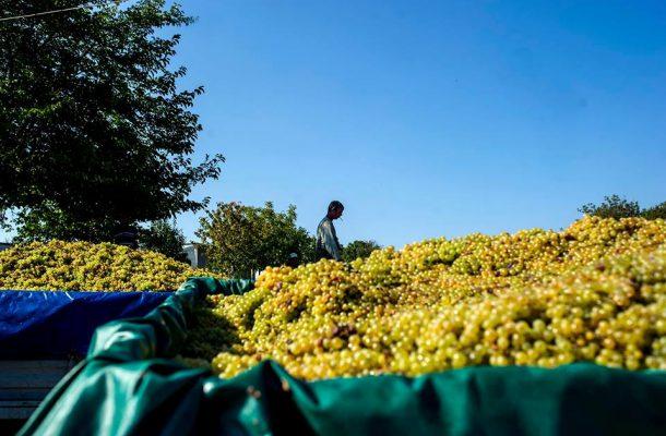 Photo of Лозари заминаа на рочиште во Гостивар, бараат пари за грозјето од 2015 година