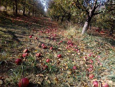 Photo of Осумдесет милиони денари за обесштетување на овоштарите од Долна Преспа