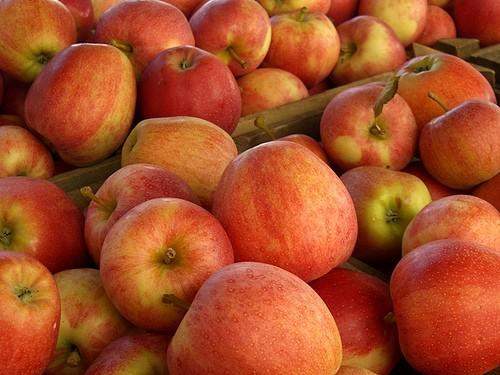 Photo of Ниската цена на јаболкото ќе ги извади овоштарите на протести