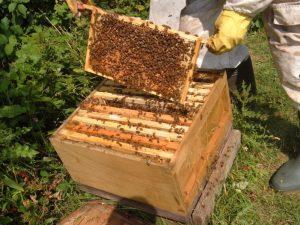 Photo of Во Пијанец се поголем е бројот на млади пчелари