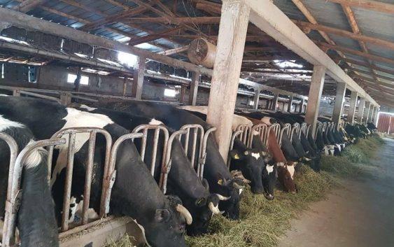 Земјоделците до крајот на годинава можат да поднесат барања за легализација на фармите