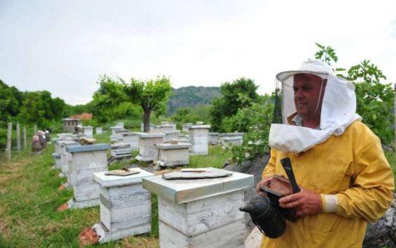 Топлиот Ноември ги измачи пчелите