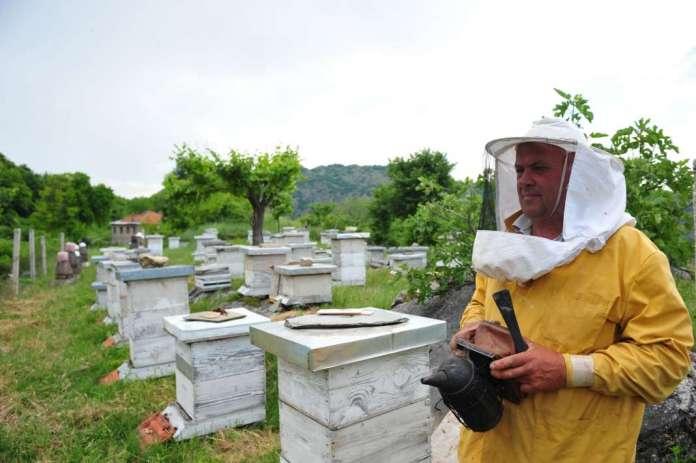 Photo of Топлиот Ноември ги измачи пчелите