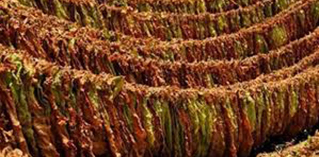 Photo of Почна исплатата на откупениот тутун, просечната цена 212 денари