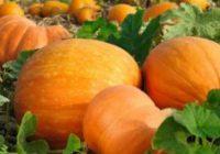 Сезонски календар на здравјето за Ноември