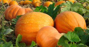 Photo of Сезонски календар на здравјето за Ноември