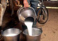 За субвенции аплицирале 50 млекопроизводители од Дебар и Центар Жупа
