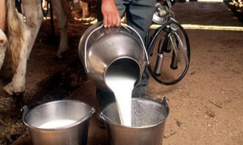 Photo of За субвенции аплицирале 50 млекопроизводители од Дебар и Центар Жупа