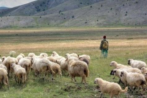 Photo of Зошто за плата од 500 евра никој не сака да биде овчар во Македонија?
