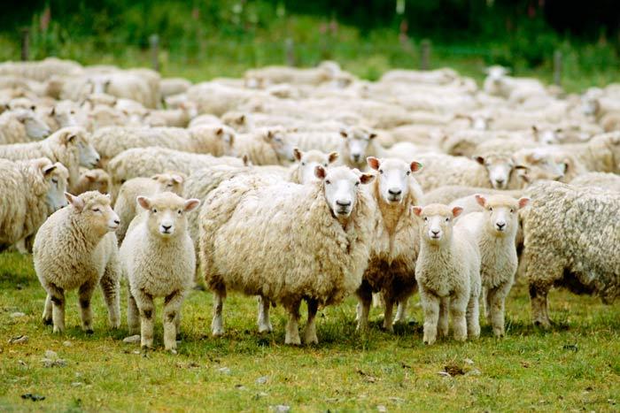 Photo of Протестот на овчарите ставен во мирување