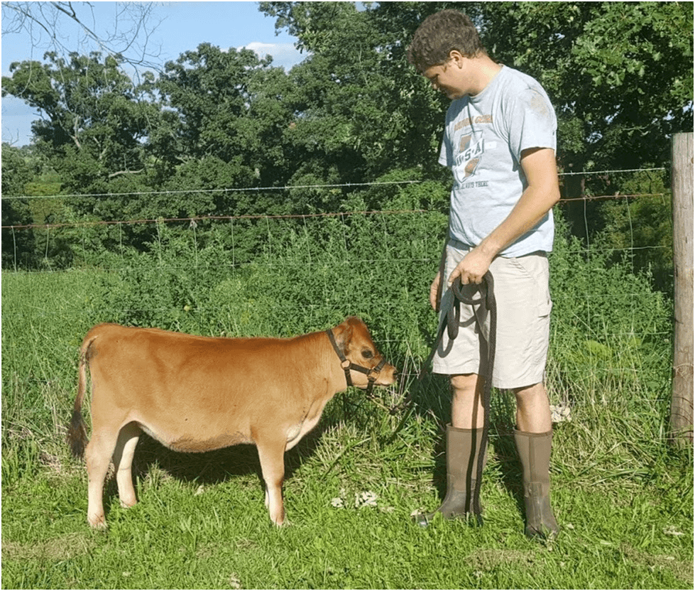 Photo of Поради предности во одгледувањето, се зголемува побарувачката на мини кравите
