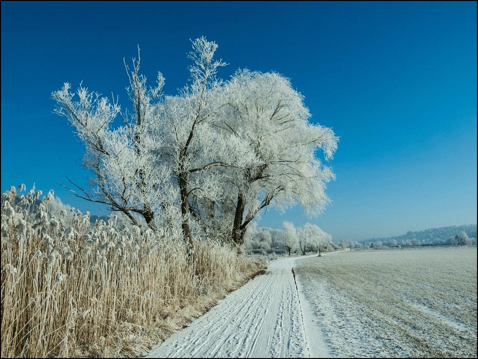Photo of Снег и покривка од мраз: Заштита и опасност за зимските посеви