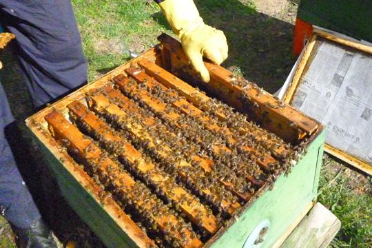 Photo of Во Тетово манифестација за промоција на развојот на пчелната кошница