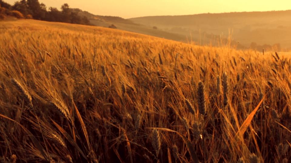 Photo of Ѝ се заканува глад на Европа во 2020 година