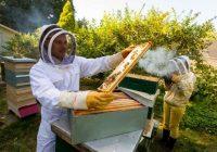 Пчеларите бараат еднаков третман со другите земјоделски гранки