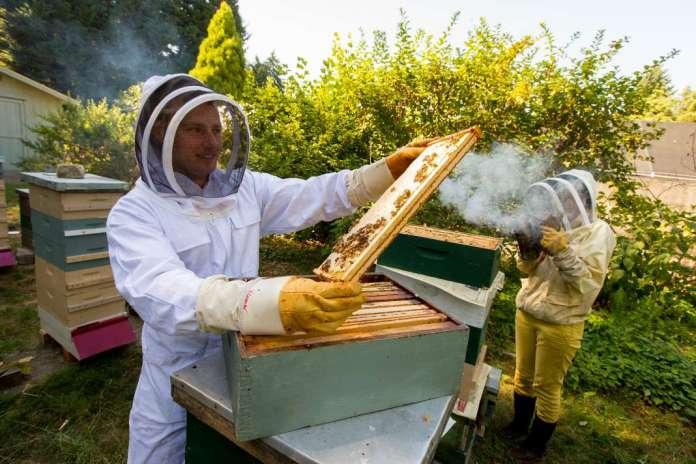 Photo of Пчеларите бараат еднаков третман со другите земјоделски гранки