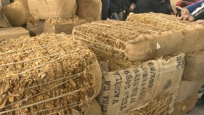 Photo of Откупен поголемиот дел од произведениот тутун во струмичко
