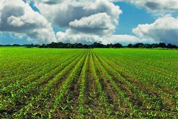 Photo of Земјоделско земјиште се нуди под закуп во Куманово, Младо Нагоричане и Љубодраг