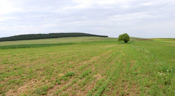 Photo of Индексот на цените во земјоделството кај инпутот е зголемен за 5.5 %, а кај аутпутот се бележи зголемување од 5.1 %
