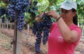 Васка Мојсовска: Руралната жена треба сама да се избори за своите права