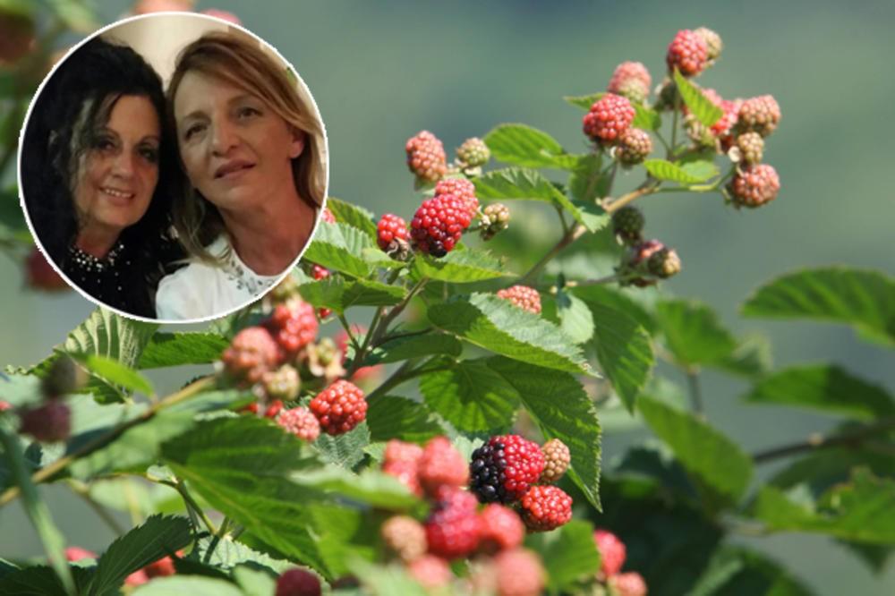 Photo of ИМ ПРОДАВААТ И НА МАКЕДОНЦИТЕ: Две жени подигнале царство со малини
