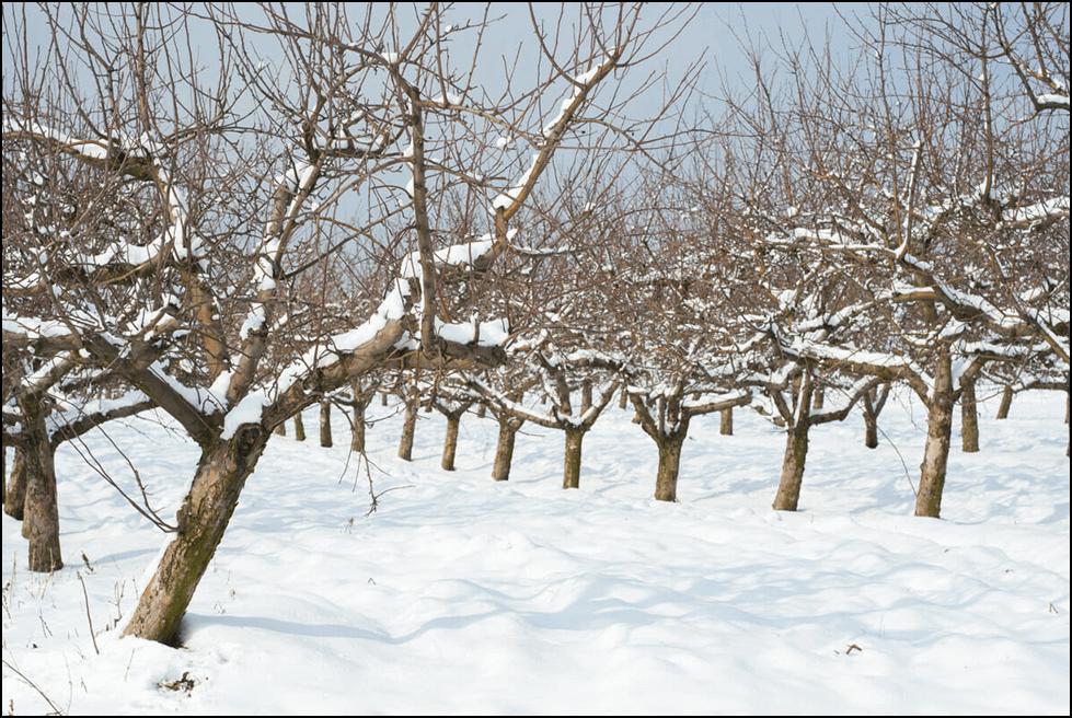 Photo of Како да ги спречите последиците од прерано движење на вегетацијата кај овошните дрвја?