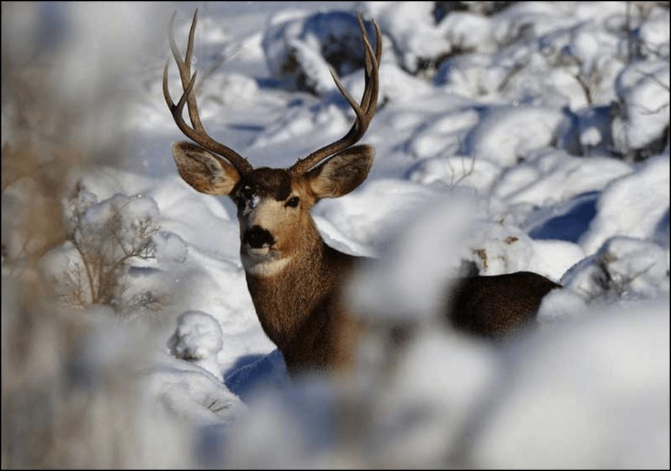 Photo of Бидете внимателни: Во периодот под снег, дивечот може да ги загрози младите овоштарници