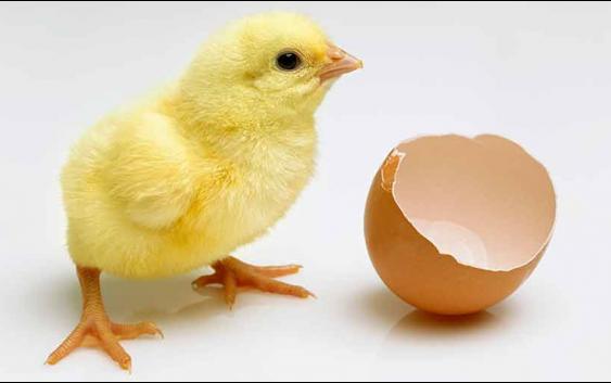 Научниците откриле како да го утврдат полот на ембрионот во јајцето