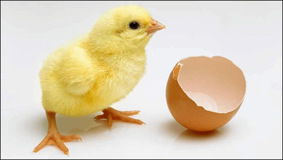 Photo of Научниците откриле како да го утврдат полот на ембрионот во јајцето