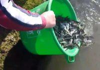 Богојавленско порибување со пастрмка во реката Брегалница во Делчево