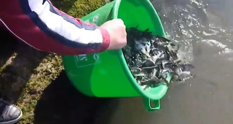 Photo of Богојавленско порибување со пастрмка во реката Брегалница во Делчево