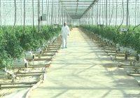 """Оранжериите во Кочани со рекордна потрошувачка на топла вода од системот """"Геотерма"""""""