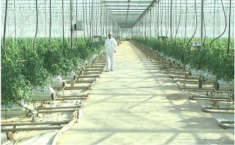 """Photo of Оранжериите во Кочани со рекордна потрошувачка на топла вода од системот """"Геотерма"""""""