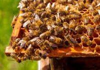 Календар на земјоделците- Пчеларство