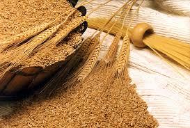 Photo of Побарувачката на пченица расте, цената останува иста
