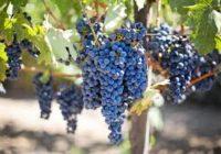 Лозарите бараат да не се дозволи ликвидација или продажба на поранешната винарија со германски капитал