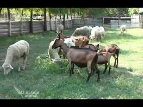 Photo of Календар на земјоделци- Овчарство и козарство