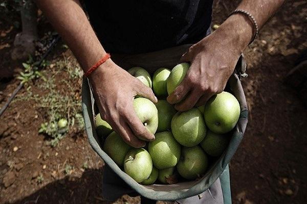 Photo of Египетски компании заинтересирани за увоз на македонско јаболко
