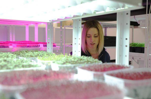 Photo of Белграѓанка дома произведува зеленчук и од тоа живее: За почеток се потребни1000 евра кои се враќаат за 2 месеци