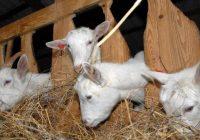 Препораки до одгледувачите на животни при ниски температури