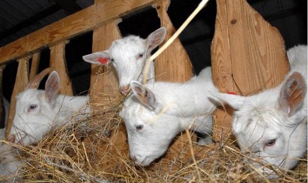 Photo of Препораки до одгледувачите на животни при ниски температури