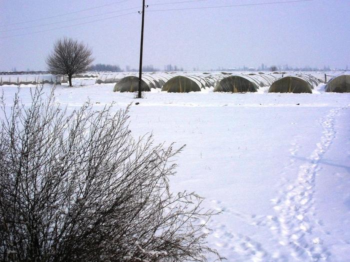 Photo of Ниските температури не се штетни за посевите во Струмичко