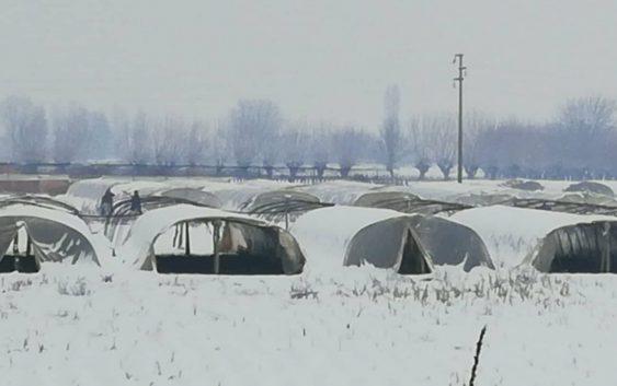 Поради снегот и температурите, раноградинарите од струмичко ,,бдеат'' над расадот и пластениците